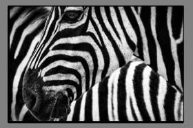 Obrazy zvířata 2825
