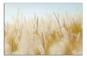 Obrazy detaily přírody 2831