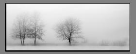 Obrazy stromy 2835
