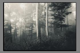 Obrazy stromy 2836