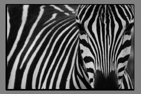 Obrazy zvířata 2839