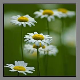 Obrazy různý květy 2845