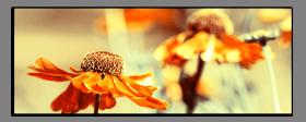 Obrazy různý květy 2851