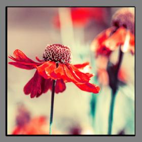 Obrazy různý květy 2852