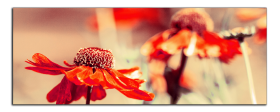 Obrazy různý květy 2853