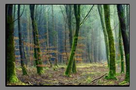 Obrazy stromy 2864
