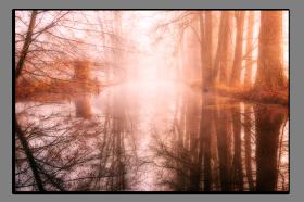 Obrazy stromy 2865