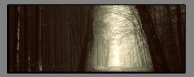 Obrazy stromy 2867