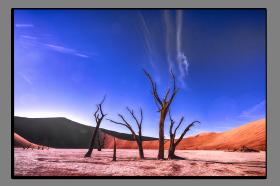 Obrazy stromy 2869