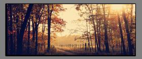 Obrazy stromy 2874