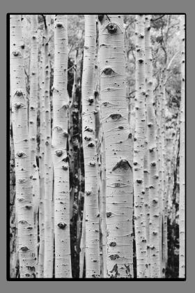 Obrazy stromy 2875