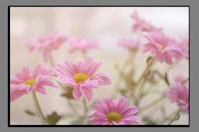Obrazy různý květy 2876