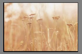 Obrazy detaily přírody 2878