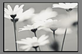 Obrazy různý květy 2879
