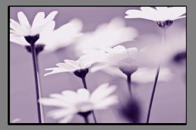 Obrazy různý květy 2880