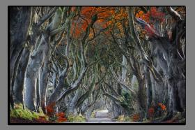 Obrazy stromy 2888