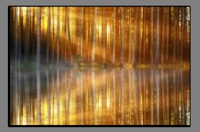 Obrazy stromy 2892