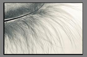 Obrazy detaily přírody 2894