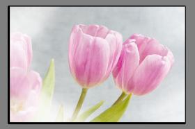 Obrazy tulipány 2915